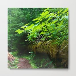 A path to an adventure Metal Print