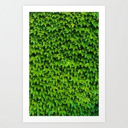 Greenery Luck (Color) Art Print
