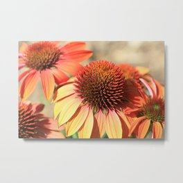 Echinacea Late Summer Bloom by Reay of Light Metal Print