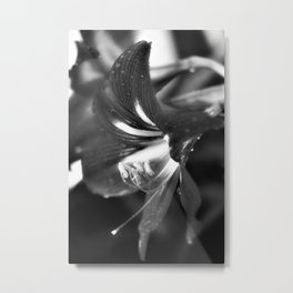 Lily in Black and White Metal Print