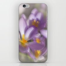 Springtime Dreams iPhone & iPod Skin