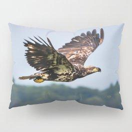 Immature Bald Eagle Pillow Sham