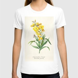 Yellow Cheiranthus Flower Vintage Illustration T-shirt
