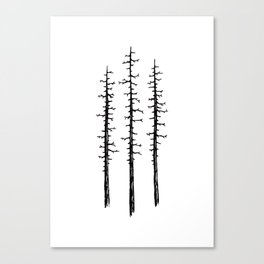 Pines Canvas Print