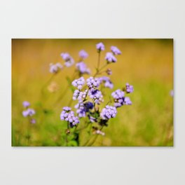 """Violette"" by ICA PAVON Canvas Print"