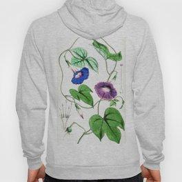 A Purging Pharbitis Vine in full blue and purple bloom - Vintage illsutration Hoody