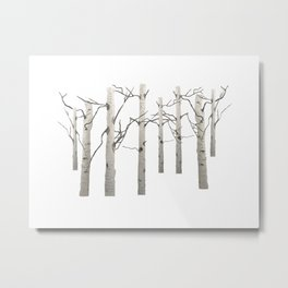 Birch Tree Forest White Bark Aspens Winter Metal Print