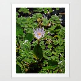 Tropical Water Lily Flower Nymphaea Daubenyana Art Print