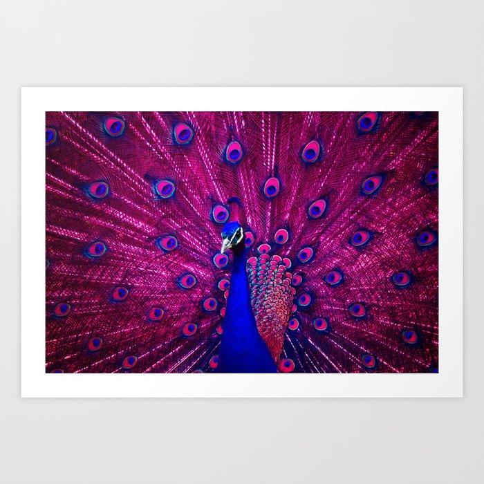Peacock Pink 85 Kunstdrucke