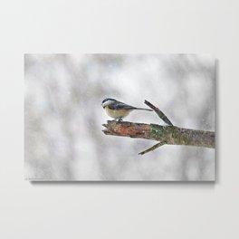 Chickadee Versus Winter Storm Stella Metal Print