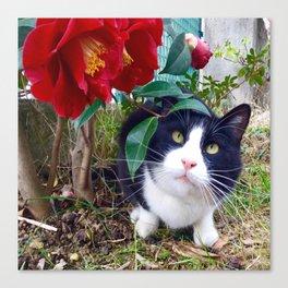 Orazio, the cat of camellias Canvas Print