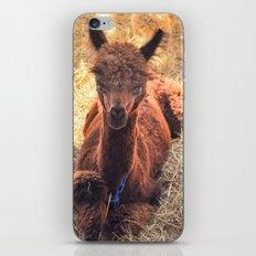 Llama Tude iPhone & iPod Skin