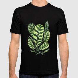 Ctenanthe T-shirt