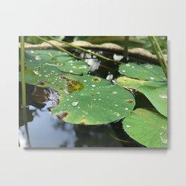 Water Lilies on a Pond Metal Print