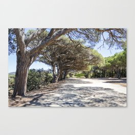 Bicycle pathway in a wood on the island of Porquerolles Canvas Print