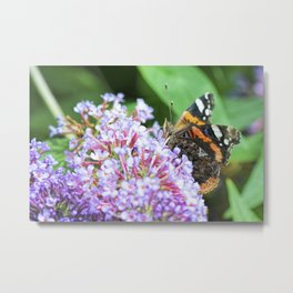 Butterfly XII Metal Print