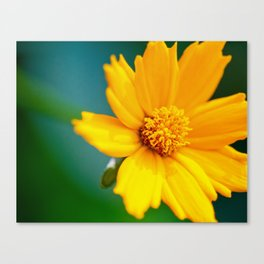 Pretty Golden Flower Canvas Print