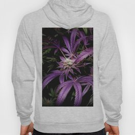 Purrple Hoody