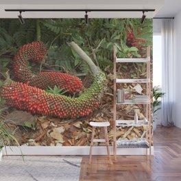 Bird's Nest Anthurium - Anthurium hookeri seed pods Wall Mural