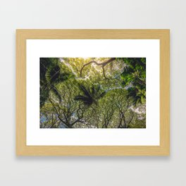Jungle Canopy Framed Art Print