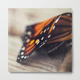 Monarch Study #2 Metal Print
