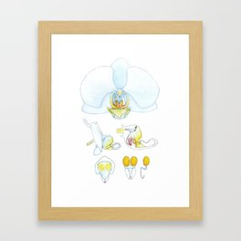 Orchid Dissection Framed Art Print