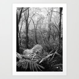 Rainforest No.7 Art Print
