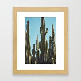 At the Cactus Garden Framed Art Print