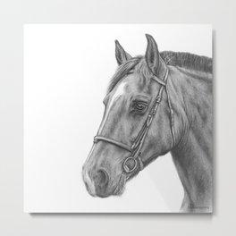 Horse graphite drawing portrait Metal Print
