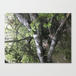 Fallen Trees Don't Fall too Far for Me Canvas Print