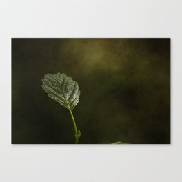 In the forest #8 Canvas Print