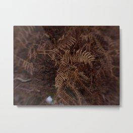 Ferns In Winter Metal Print