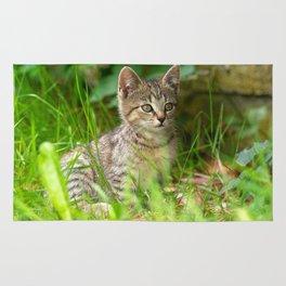 Sweet Baby Tiger Rug