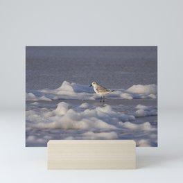 Foamy Sanderling | Calidris Alba | North sea coast beach | The Netherlands | Fine art bird photography Mini Art Print