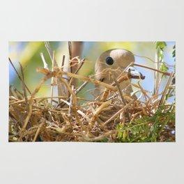 Nest Rug