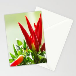 Chili peppers on the vine Stationery Cards