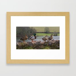 Ducks! Framed Art Print