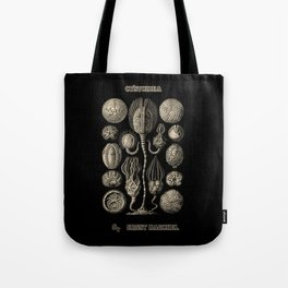 """""""Cystoidea"""" from """"Art Forms of Nature"""" by Ernst Haeckel Tote Bag"""