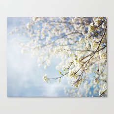 White Flowers Against the Sky Canvas Print