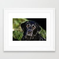 labrador Framed Art Prints featuring Labrador by The Time Catcher
