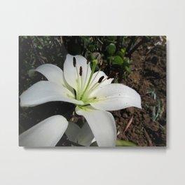 White lilium 3 Metal Print