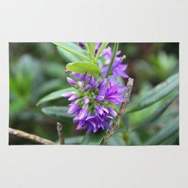 Purple Paradise Rug