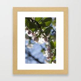 large white flowers Framed Art Print
