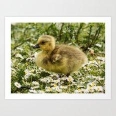 Fluffy Gosling Art Print