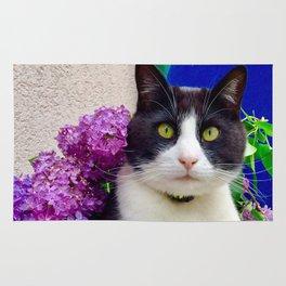 Orazio charming cat in the blue Rug