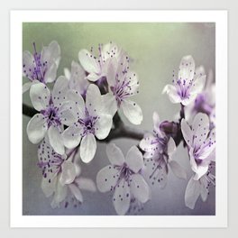 Misty Flowers Art Print