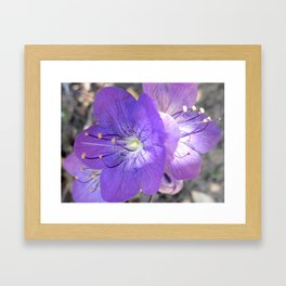 "Flower ""Early Morning"" Framed Art Print"