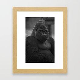Oumbi The Silverback Gorilla Framed Art Print