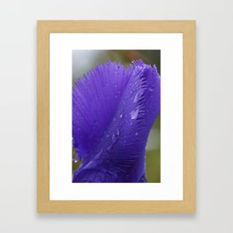 Blue Gentian in the rain. Framed Art Print
