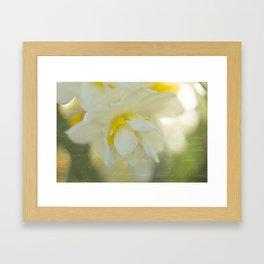 Jonquil Framed Art Print